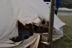 テントが大炎上!!薪ストーブでコットンテントが焼けちゃいました(>_<)