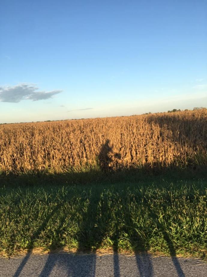 toms cornfields