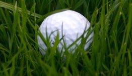 golf ball in tall grass or rough