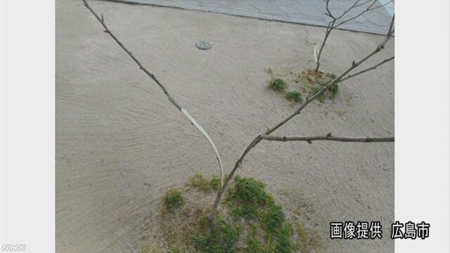 平和公園の韓国国花ムクゲ木3本裂かれる 広島、韓国人慰霊碑脇