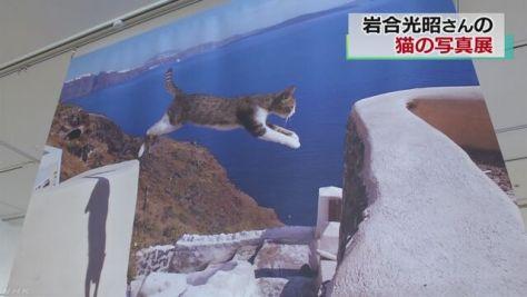 「世界ネコ歩き」の写真展 岩合光昭さんが撮影 水戸