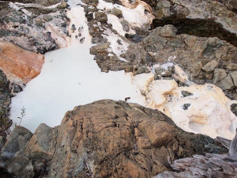 呼吸のための遺伝子を持たない微生物が発見された強アルカリ性の泉(中央の乳白色の部分)=米カリフォルニア州(海洋研究開発機構提供)