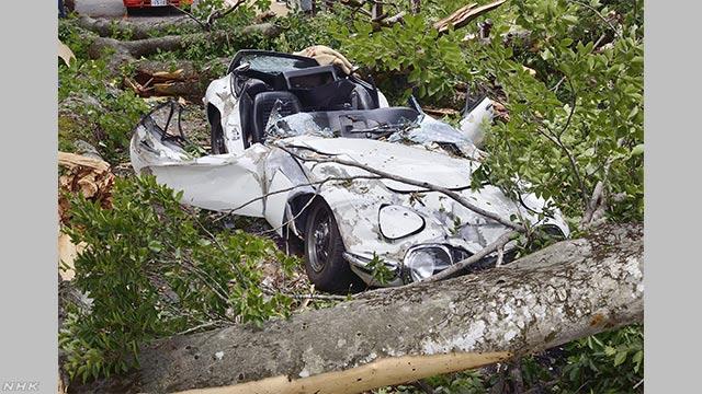 幻の名車「トヨタ2000GT」に倒木直撃 道路管理の県と和解成立 | NHKニュース