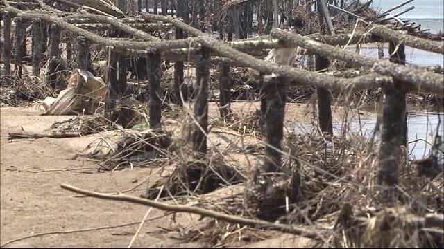 広島 養殖牡蠣の種を付けた「カキ棚」被災 呉市で約3000万円の被害