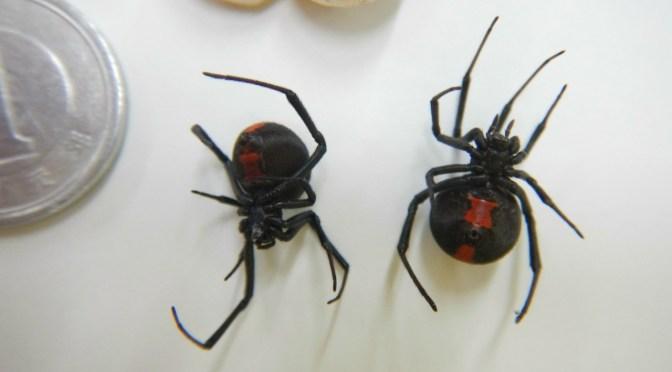 セアカゴケグモ発見 清水区三保の畑で 卵も同時に発見 繁殖の恐れも 静岡市が周辺調査へ – FNN.jpプライムオンライン