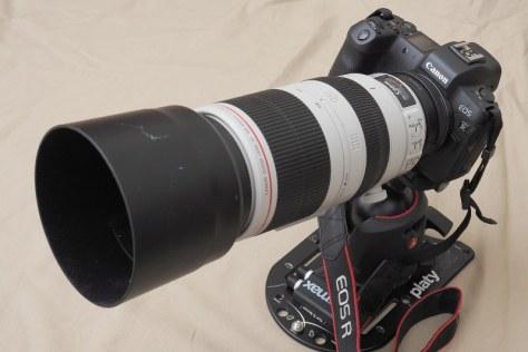 キヤノン初のフルサイズセンサー搭載ミラーレスとして発売されたEOS-R。レンズはEF100-400mm F4.5-5.6L IS II USM(コントロールリング マウントアダプターEF-EOS Rつき)=米田堅持撮影