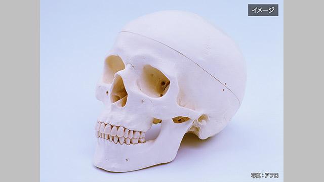 高校の頭蓋骨 人間のものと判明 生徒が美術でデッサン 鹿児島 | NHKニュース