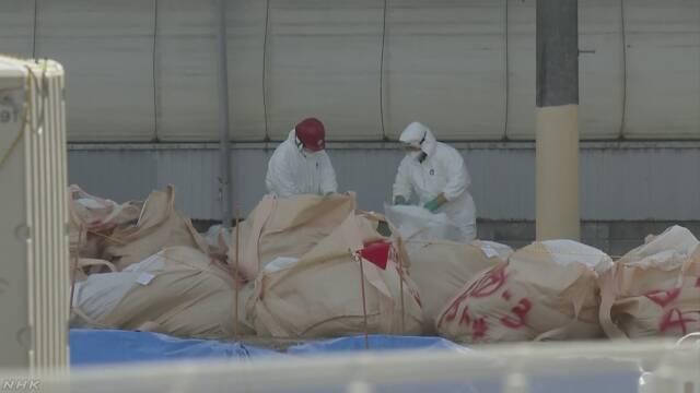 豚コレラ対策 現時点ではワクチン使用しない方針 | NHKニュース