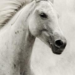Horse Neck Diagram 69 Mustang Under Dash Wiring The White Ii – Equestrian Portrait - 54ka [photo Blog]