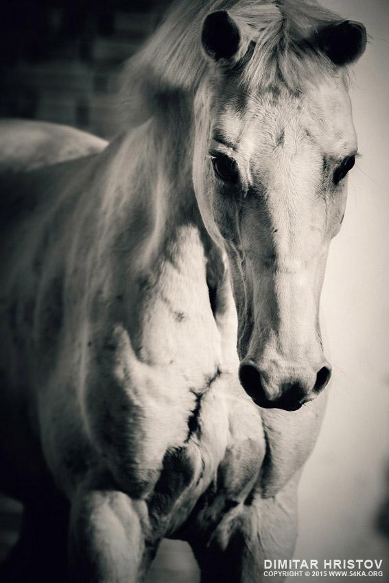 diagram of outside ear single pickup wiring white horse close up portrait - 54ka [photo blog]