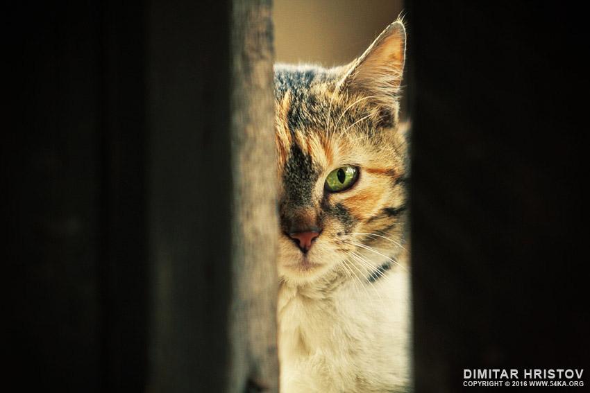 Cute Kitty Wallpapers Apps Green Eye Cat Close Up Portrait 54ka Photo Blog