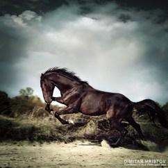 Horse Neck Diagram Kitchen Light Wiring Beautiful Black Stallion Running On The Stormy Sky - 54ka [photo Blog]