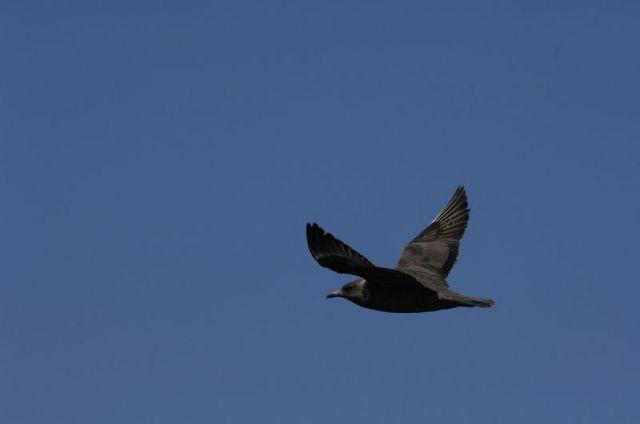 11-4-12-F03 [Mystery Bird C]