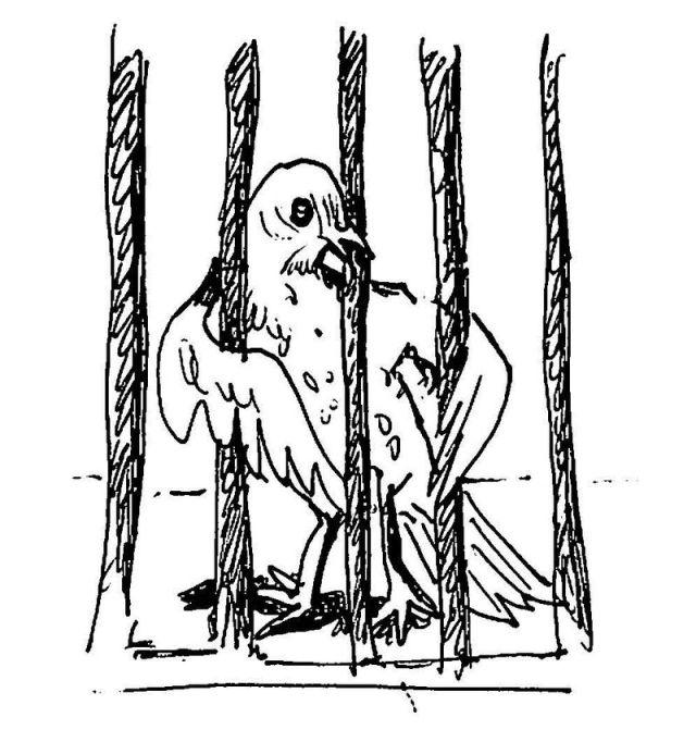 Cartoon_bird_in_zoo-110815[1]b