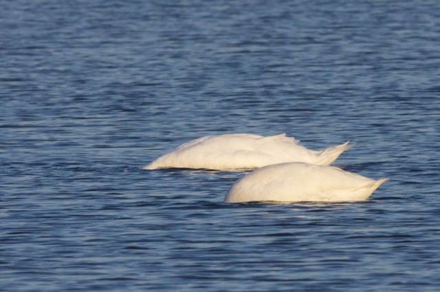 12-3-18-F01 [Photo for Print Version of Birding]