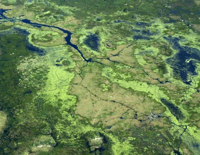 Okavango delta BINNS IMG_1211 copy