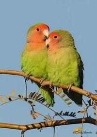 RFLO Birding