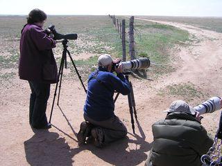 Photo - Folks birding at festival