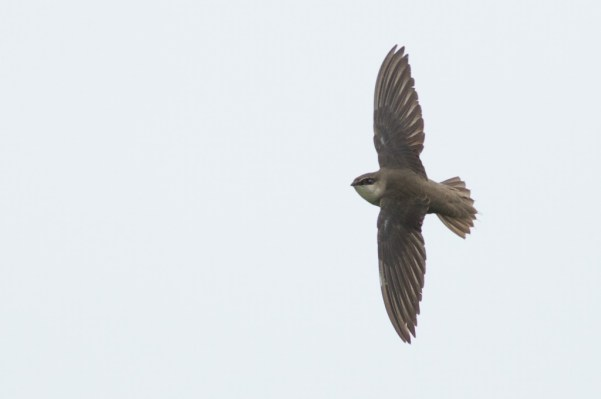 13-4-16-03 [Quiz Bird C]