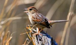 Doyle Bachman's Sparrow