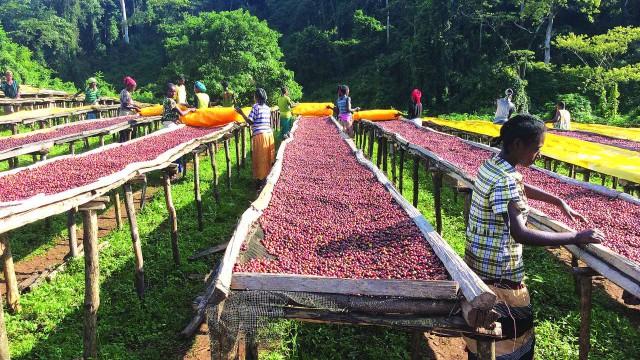 什麼是日曬 水洗 蜜處理 ? 5分鐘一次搞懂,讓你成為咖啡達人 – Accupass Blog