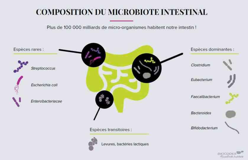 définition du microbiote intestinal