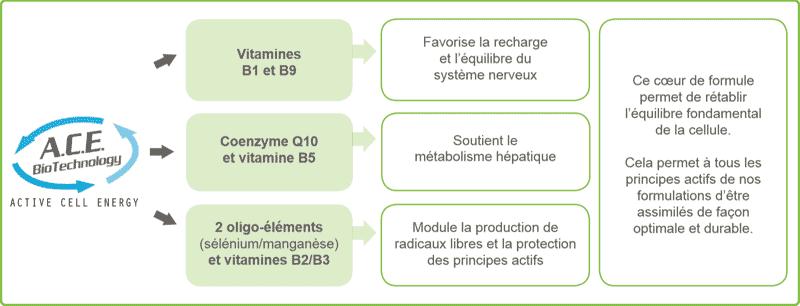 Le fonctionnement d'ACE biotechnologie