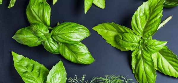 plantes anti-cellulite