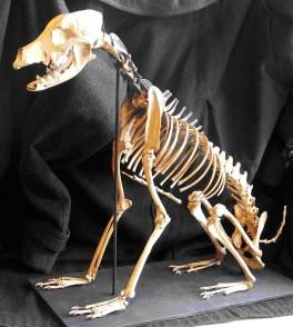 maryrosedog