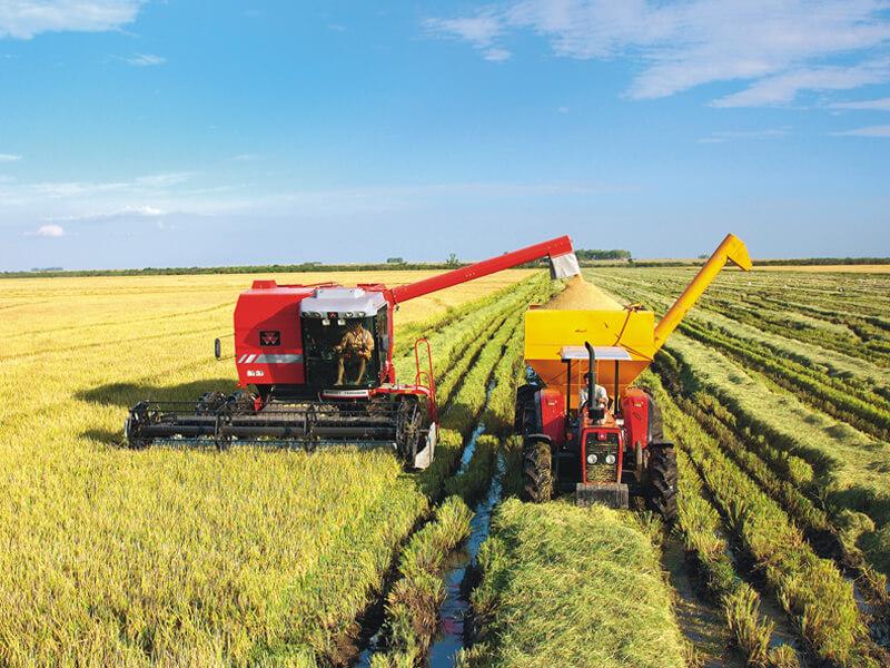 imagens enviadas de lavoura de arroz