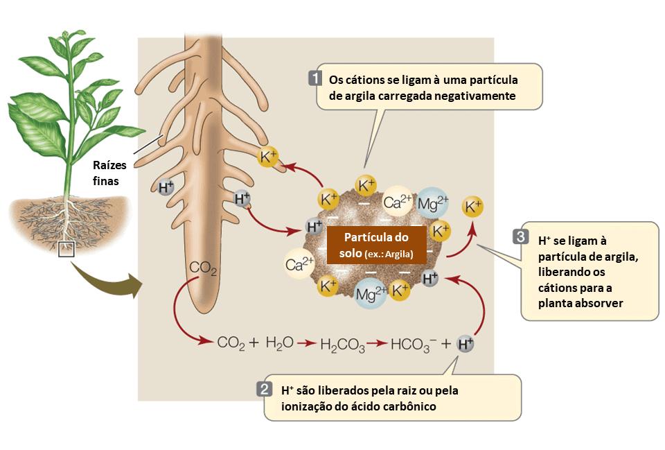 ctc-solo-nutrientes
