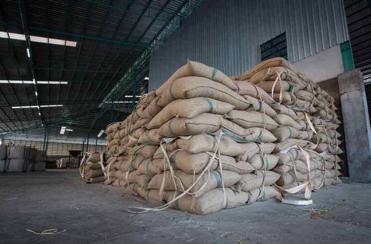 armazenamento-de-sementes