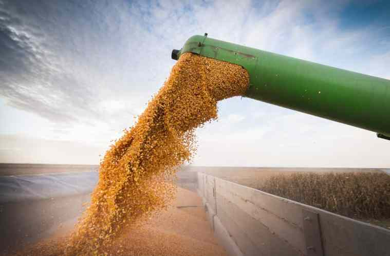 umidade do milho para colheita
