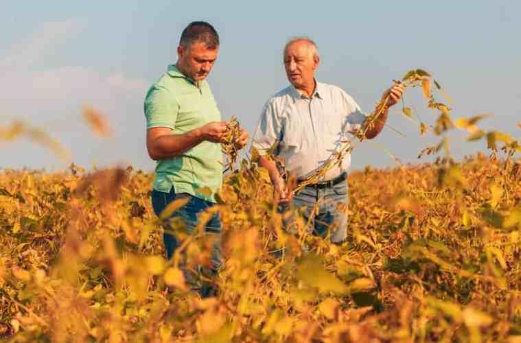consultoria agrícola