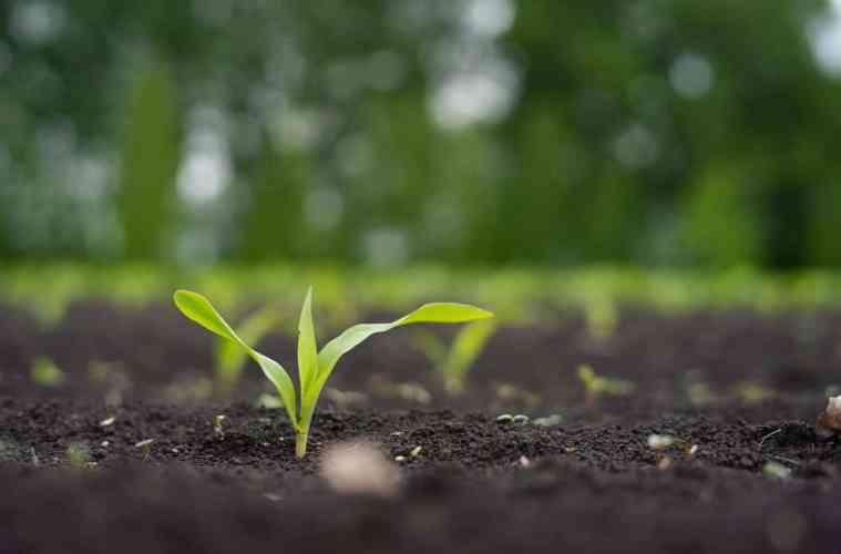 herbicida pré-emergente milho