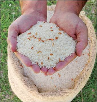 mistura de sementes arroz