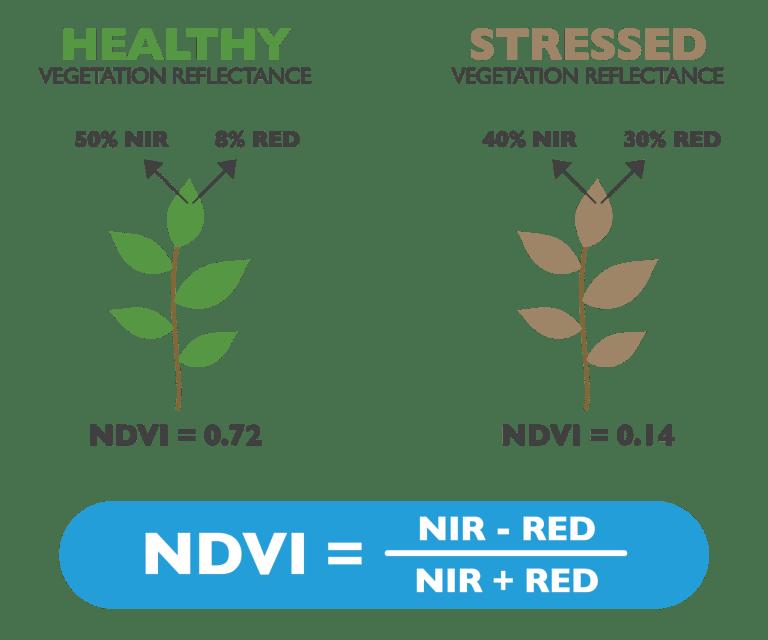 índice de vegetação NDVI