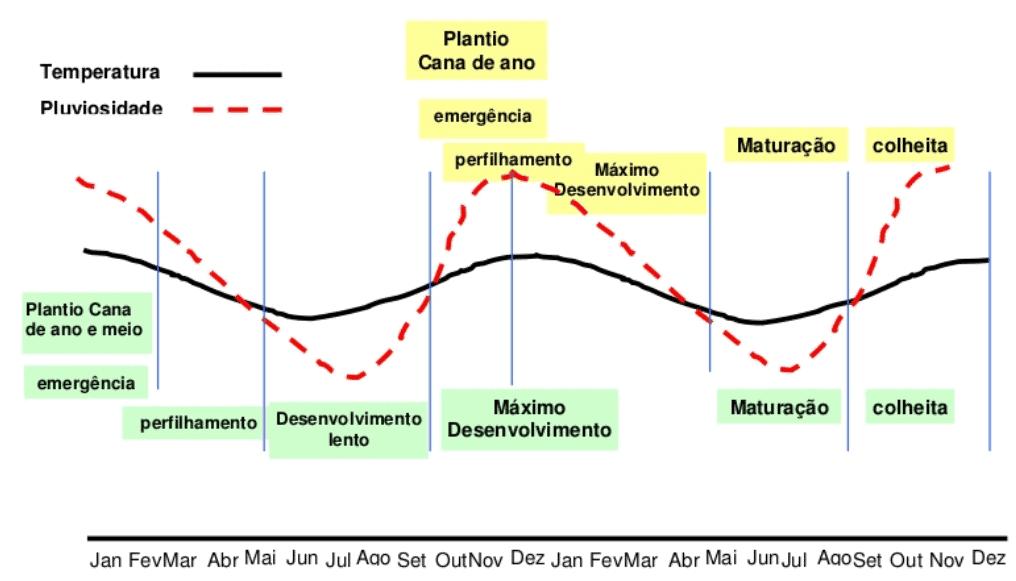 plantio cana ano-meio