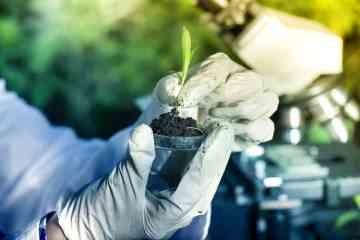 biotecnologia na agricultura