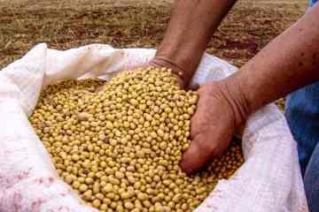 Lucro histórico com gestão agrícola