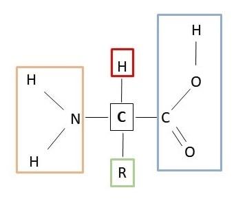 estrutura de um aminoácido