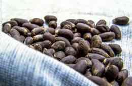 cálculo de semeadura do algodão