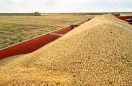 métodos de amostragem de grãos