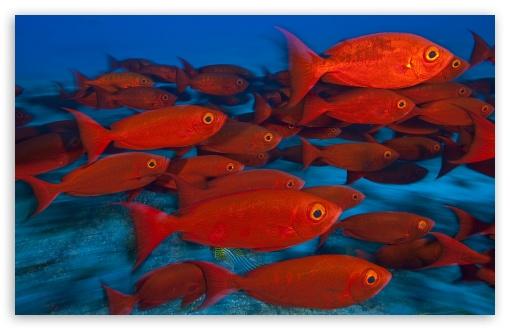 school_of_fish