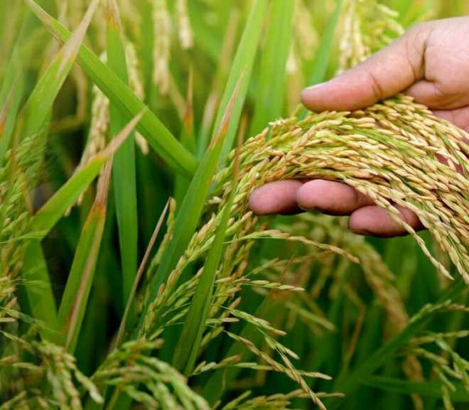 Wrong Reasons For Not Investing In Agriculture