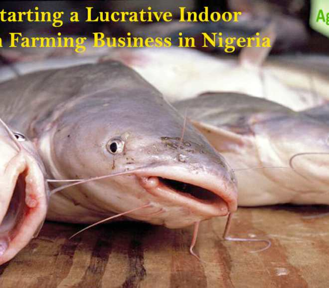 Starting a Lucrative Indoor Fish Farming Business in Nigeria