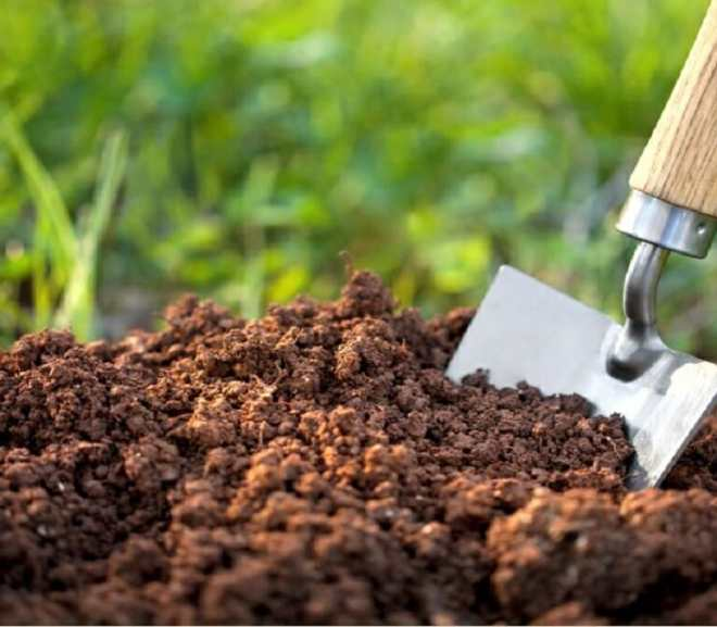 Why You Should Practice Soil Testing in Agriculture