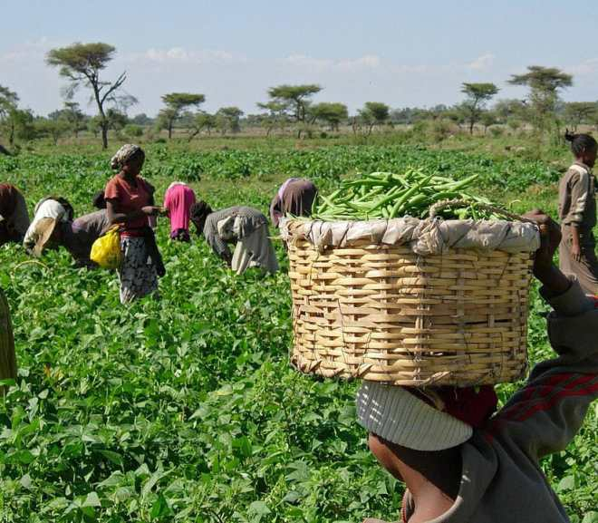 Investment in Agriculture through Crowdfunding