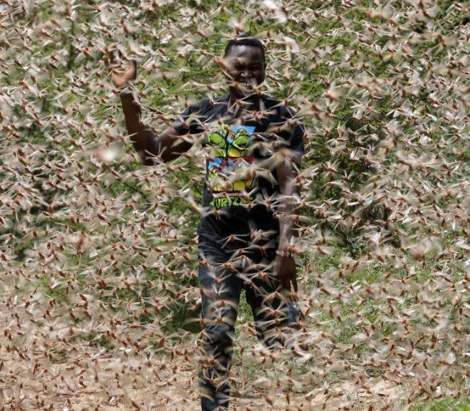 Locust Swarms Are Threatening Harvests In East Africa- FAO
