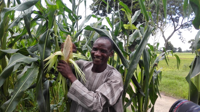 Maximizing Agricultural Potential in Nigeria Through Index-Based Insurance – Agrodomains Offers Multi-faced Solutions